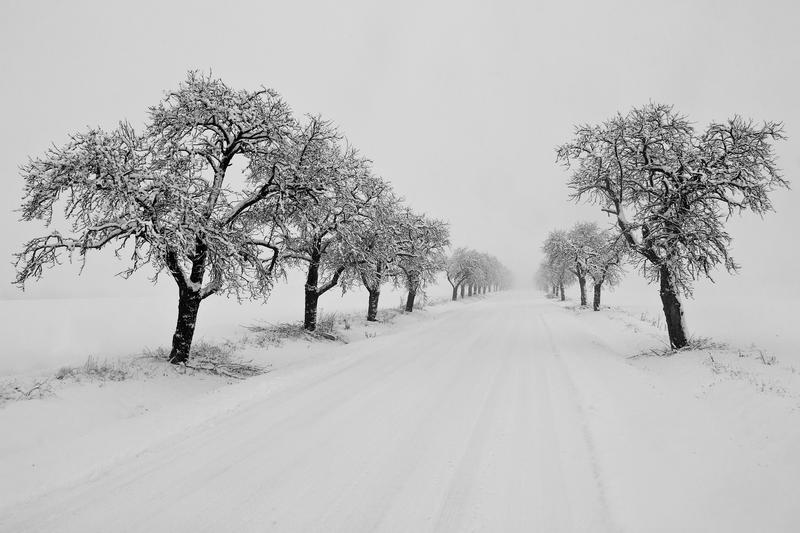 Slovácké stromořadí