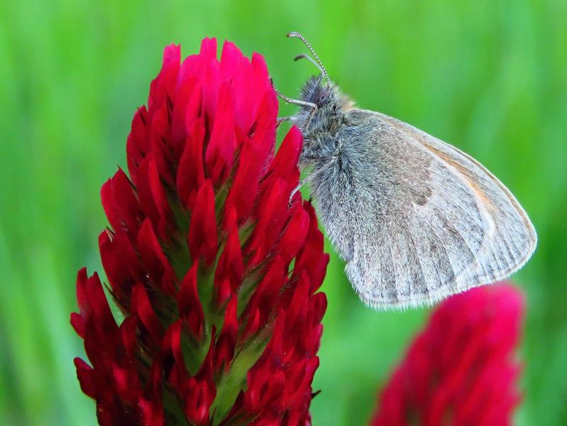 10. Motýli