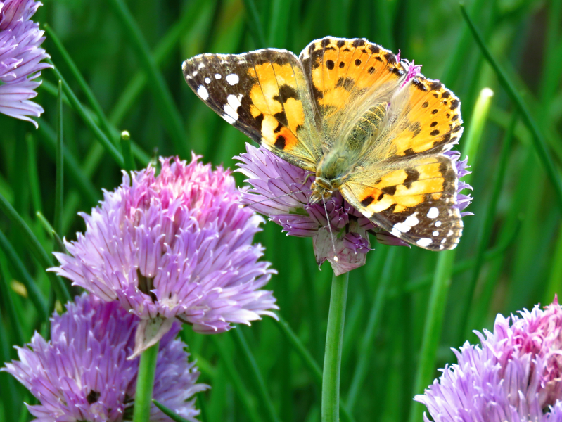 11. Motýli