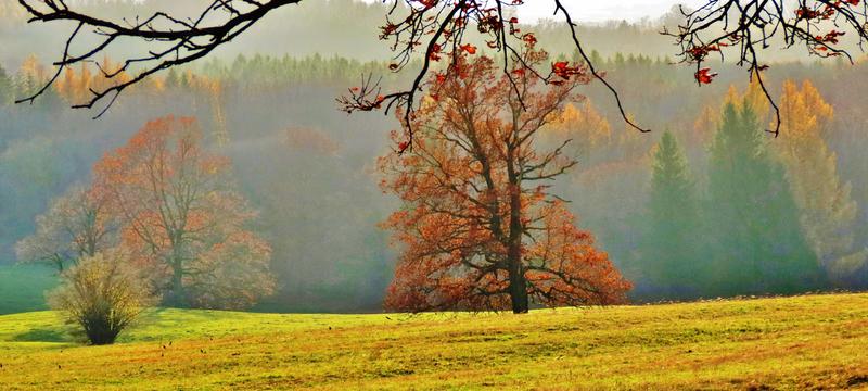 LESNÁ - pozdní listopadové odpoledne