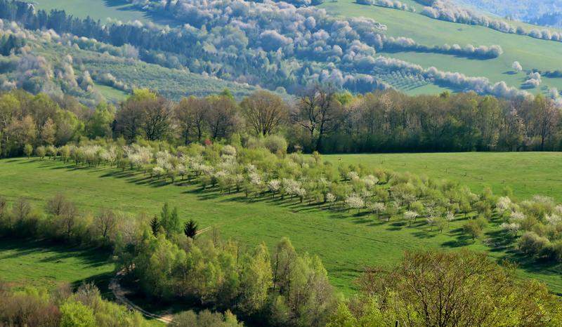 Vápenické jarní sady