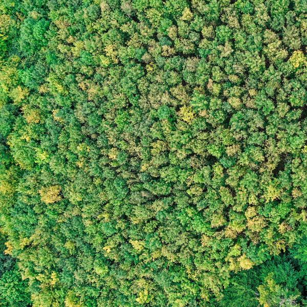 Stromy VI