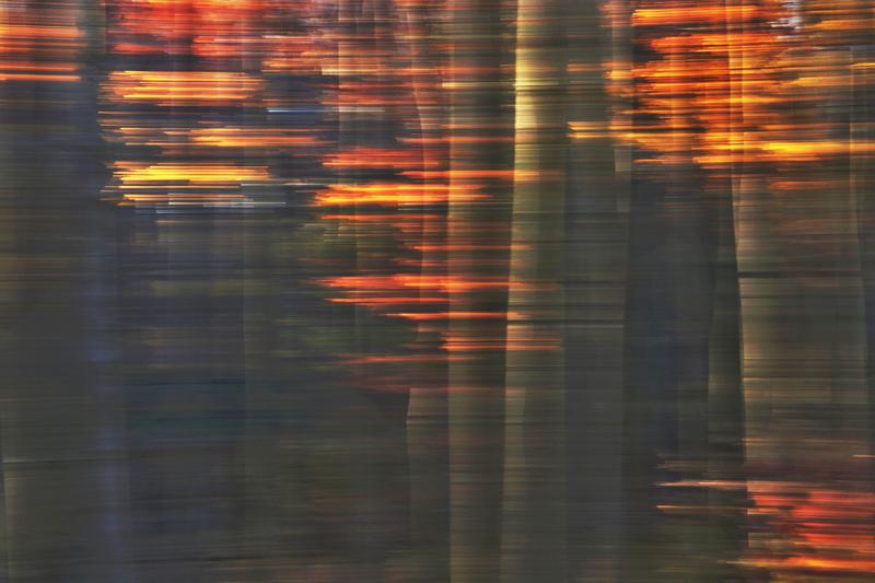 Les v Chřibech II.