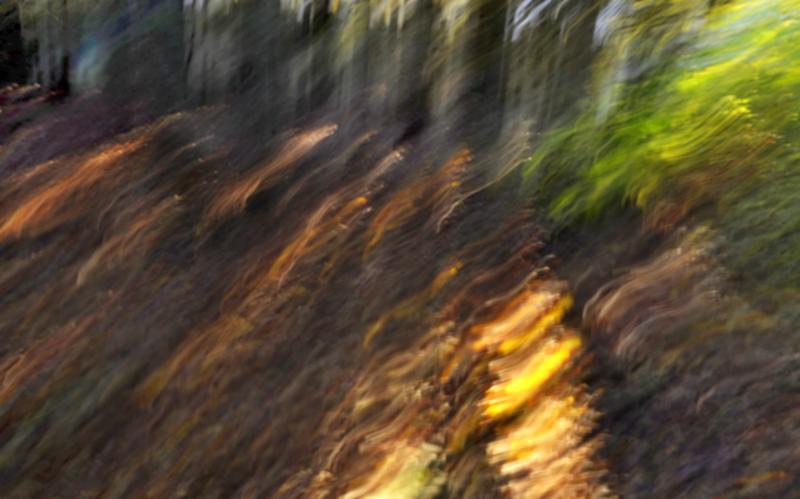 Les v Chřibech IV.