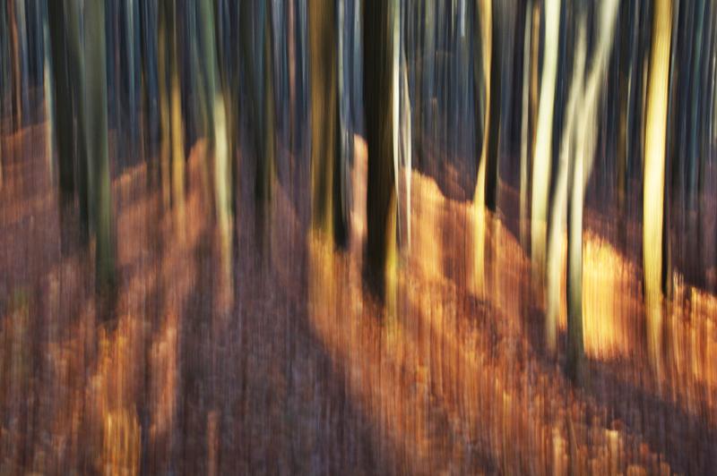 Les v Chřibech III.