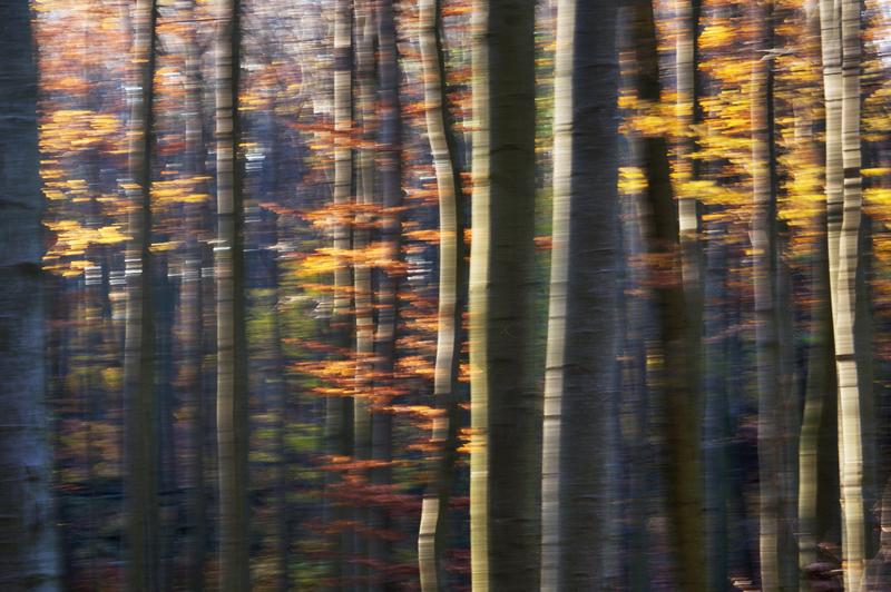 Les v Chřibech VI.