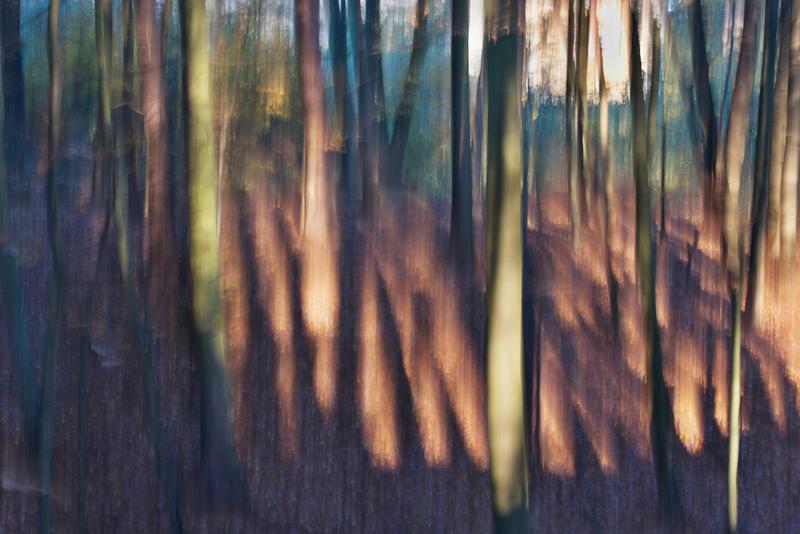 Les v Chřibech V.