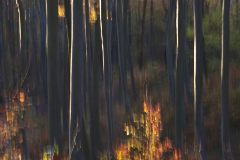 Les v Chřibech I.