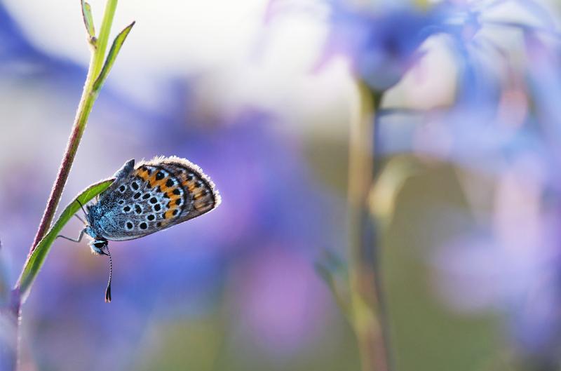 Motýl v moři modři