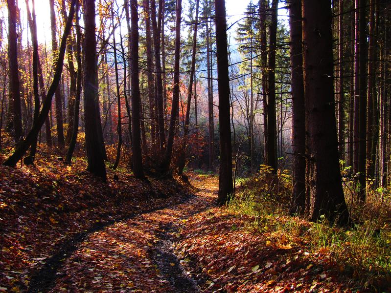 podzimní les pod Buchlovem