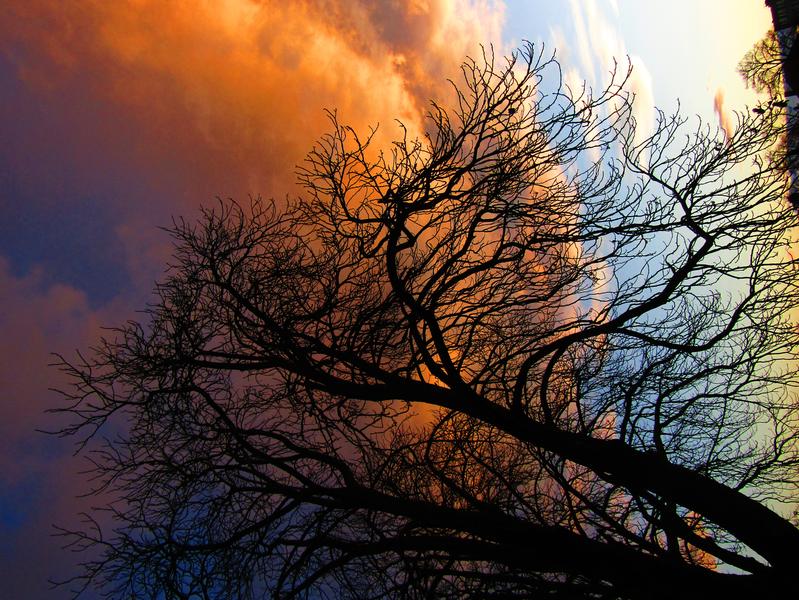 oranžové mraky za větvemi kaštanu ráno u Moravy