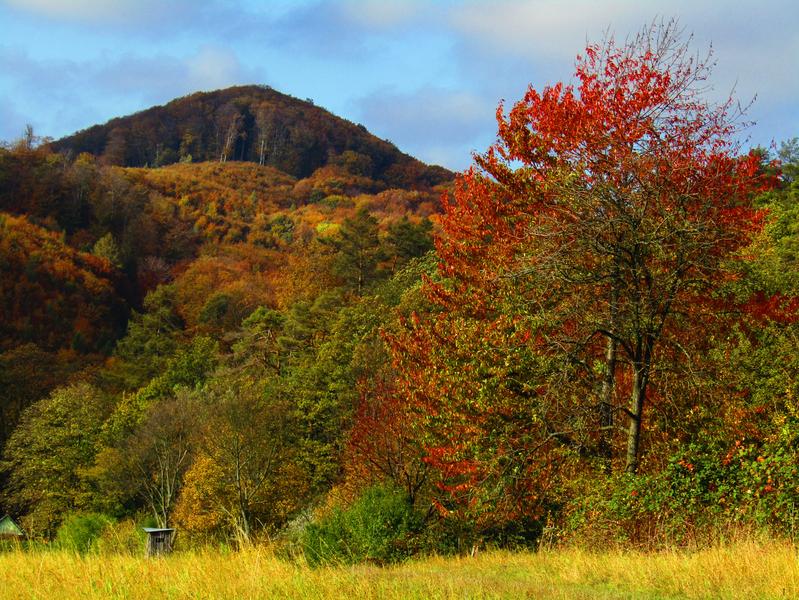 přírodní památka - Holý kopec