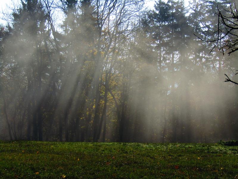 mlhavé ráno na Hříběcí louce nad Zikmundovem