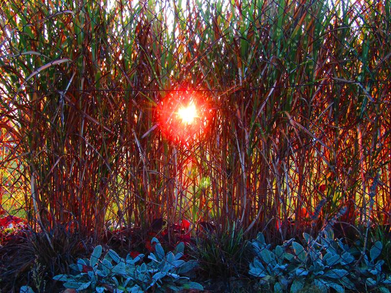 ranní slunce v travinách