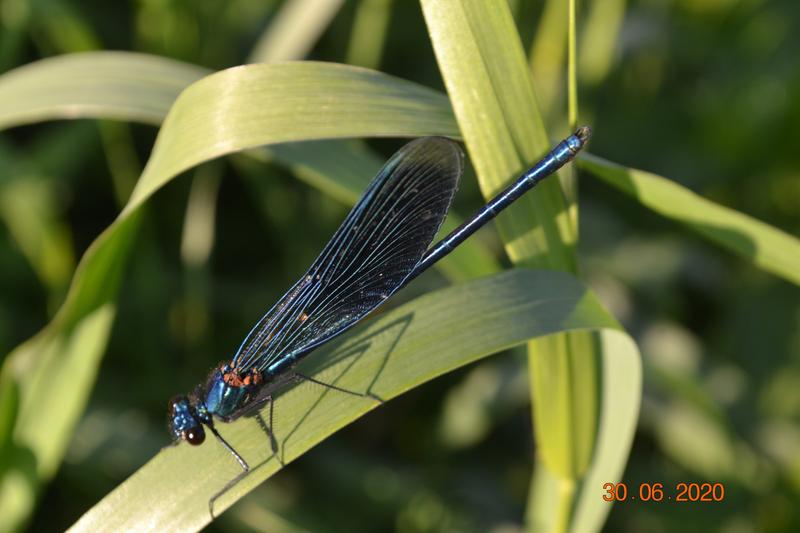 Motýlice u řeky Moravy