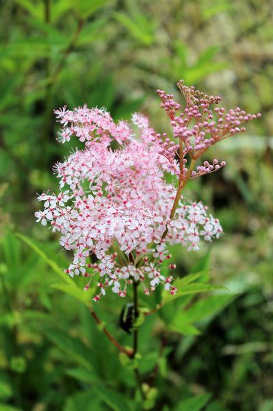 Neupravený květ