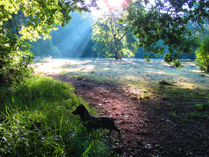Ráno v Kunovském lese