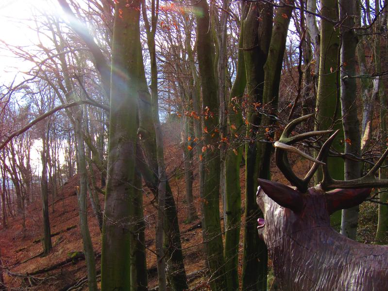 dřevěný jelen na lesnické naučné stezce okolo Buchlova